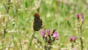 Mariposa y escarabajos Imagen de archivo