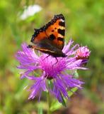 Mariposa y flor Imagenes de archivo