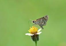 Mariposa y flor Fotografía de archivo