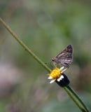 Mariposa y flor Foto de archivo