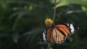 Mariposa y flor almacen de metraje de vídeo