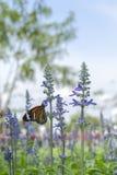 Mariposa y flor Imágenes de archivo libres de regalías