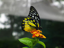 Mariposa y flor Fotografía de archivo libre de regalías