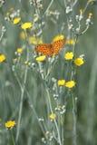 Mariposa y flor - muestras de la primavera Fotos de archivo libres de regalías