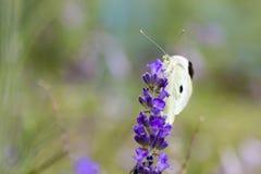 Mariposa y flor suaves del foco con el fondo borroso Fotos de archivo