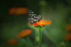 Mariposa y flora Fotografía de archivo