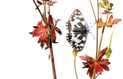 Mariposa y flora Imágenes de archivo libres de regalías