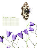 Mariposa y flora Foto de archivo libre de regalías