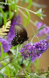 Mariposa y floraciones imagen de archivo libre de regalías