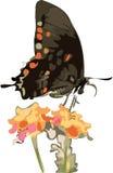 Mariposa y flores Fotografía de archivo