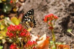 Mariposa y flores comunes Fotos de archivo