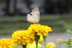 Mariposa y flores que pintan nuestra vida colorida Imagen de archivo