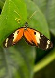 Mariposa y huevos Foto de archivo libre de regalías
