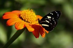 Mariposa y la flor Imagenes de archivo