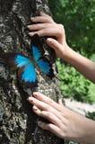 Mariposa y manos azules Fotografía de archivo libre de regalías