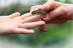 Mariposa y niños Fotografía de archivo libre de regalías