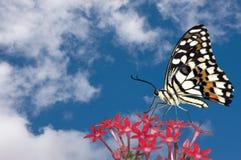 Mariposa y nubes Imagen de archivo libre de regalías