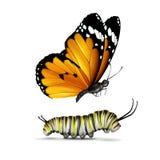 Mariposa y oruga llanas del tigre stock de ilustración