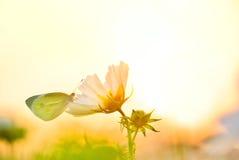 Mariposa y puesta del sol fotos de archivo
