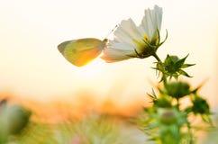 Mariposa y puesta del sol imagenes de archivo