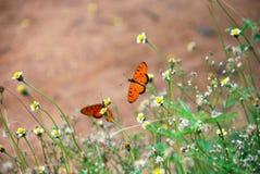 Mariposas Imagenes de archivo