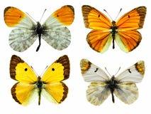 Mariposas aisladas Imagen de archivo libre de regalías