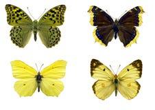 Mariposas aisladas Fotos de archivo libres de regalías