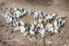 Mariposas cerca del agua Fotografía de archivo