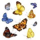 Mariposas coloreadas fijadas Imagen de archivo libre de regalías
