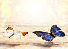 Mariposas coloreadas que vuelan sobre un fondo ligero Foto de archivo