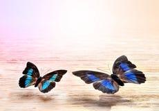 Mariposas coloreadas que vuelan sobre un fondo ligero Fotografía de archivo