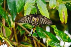 Mariposas coloridas foto de archivo libre de regalías