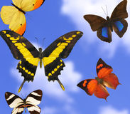 Mariposas coloridas Fotos de archivo