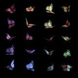 Mariposas coloridas en negro imagen de archivo