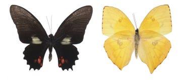 Mariposas coloridas sobre un fondo blanco. Foto de archivo
