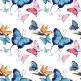 Mariposas coloridas tropicales de la primavera apacible blanda maravillosa sofisticada hermosa brillante con el modelo de flores  ilustración del vector