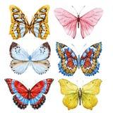 Mariposas de la acuarela stock de ilustración