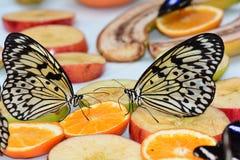 Mariposas de la ninfa del árbol en la comida fría de la mariposa Fotografía de archivo