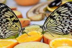 Mariposas de la ninfa del árbol en la comida fría de la mariposa Foto de archivo libre de regalías