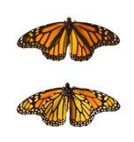 Mariposas de monarca, aisladas Imagen de archivo libre de regalías