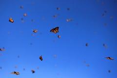 Mariposas de monarca, Michoacan, México foto de archivo
