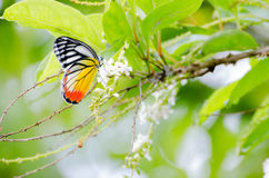 Mariposas del verano Fotos de archivo libres de regalías