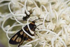 Mariposas dentro de la flor Imagenes de archivo