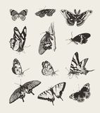 Mariposas dibujadas tinta Fotos de archivo libres de regalías