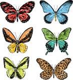 mariposas drenadas mano Imagen de archivo libre de regalías