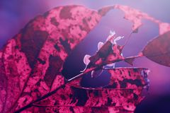 Mariposas, mariposas en mariposas de las ramitas, mariposas en las ramitas foto de archivo