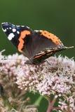 Mariposas en el bosque Imagen de archivo libre de regalías