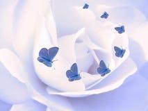 Mariposas en el pétalo color de rosa Imagenes de archivo