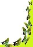 Mariposas en fondo verde Fotos de archivo