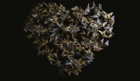 Mariposas en forma de corazón del vuelo de la mariposa, amarillas y negras Imágenes de archivo libres de regalías